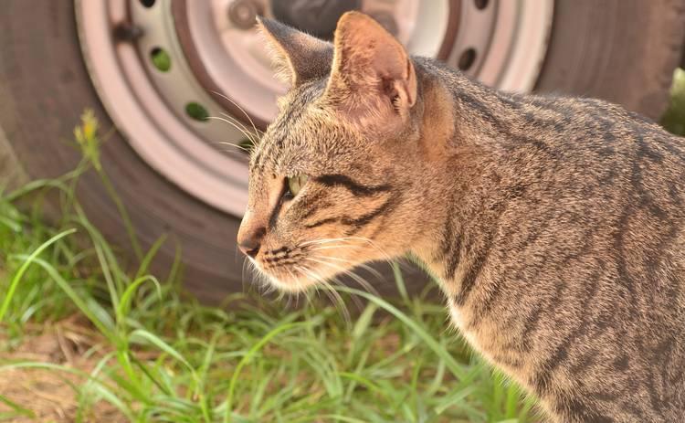 Осторожно, коты! Водители должны быть внимательнее