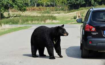 Смешные случаи несмешных нападений животных на авто