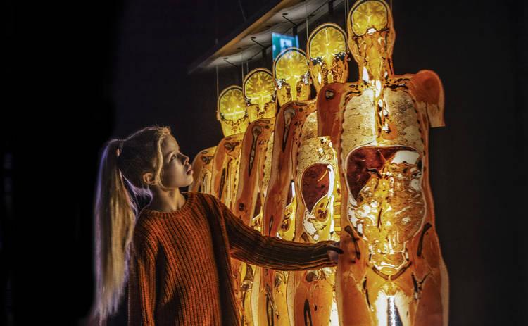 В Киев впервые везут всемирно известную выставку человеческих тел