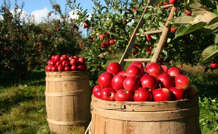 Яблочный Спас 2019: дата, главные традиции, приметы