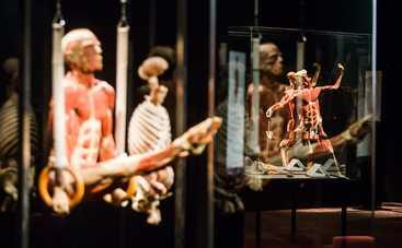 7 причин посетить выставку Body Worlds — «Вселенная тела»