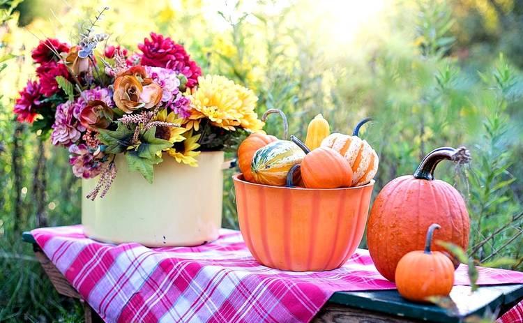 Главный овощ осени – тыква: ее польза и особенности
