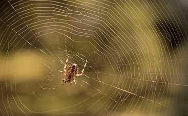 Как избавиться от пауков в вашем доме