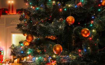 Новый год 2020: когда и где засияет главная елка страны?