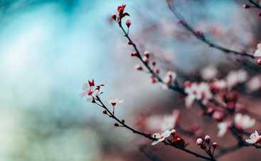 27 марта: какой сегодня праздник, приметы, именинники и запреты