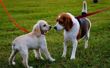 Как правильно выгуливать домашних животных во время карантина
