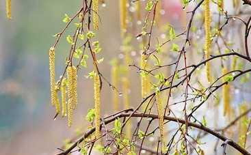 11 апреля: какой сегодня праздник, приметы, именинники и запреты