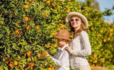 Как вырастить лимон в домашних условиях: пошаговая инструкция