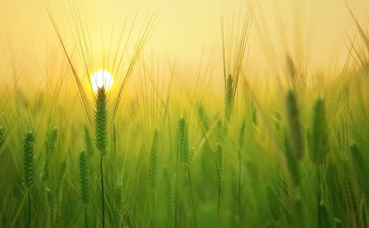 Вознесение Господне: что можно и нельзя делать в этот день?