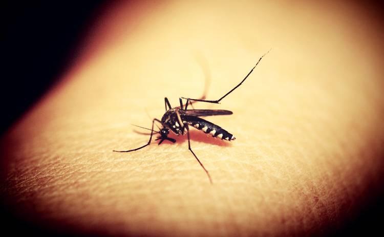 Чем опасны комары: правда и мифы о кровососущих насекомых