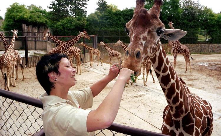 Утро с Интером: обед с жирафом, 5G в Украине, 140 млн.долларов за Черный квадрат Малевича