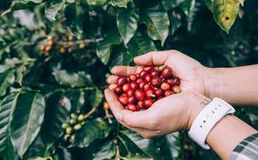 Полезная ягода: ТОП-5 причин полюбить черешню