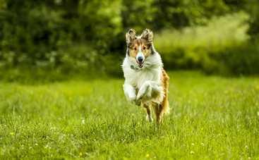 ТОП-3 самых ярких актеров-собак в истории кинематографа: кто они на самом деле