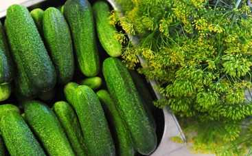 Малосольные огурцы: простой и быстрый рецепт от Лизы Глинской