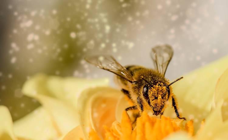 Как оказать первую помощь при укусе пчелы: пошаговая инструкция