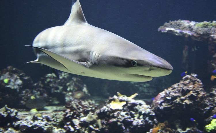 Ученые показали самую старую акулу, которой исполнилось 393 года
