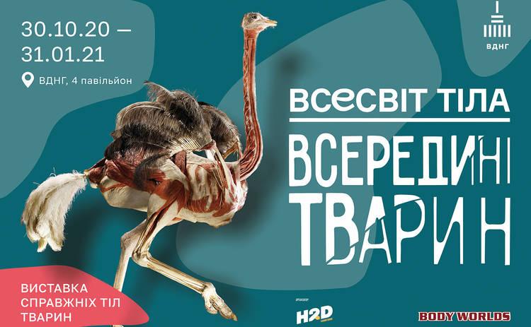 Анатомическое сафари: возвращение шокирующей выставки настоящих тел