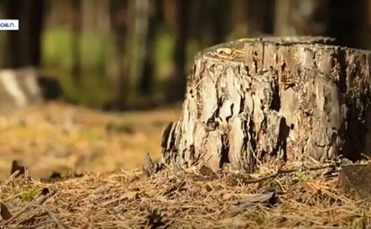 Как в Украине восстанавливают лес?