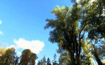 В программе Утро с Интером рассказали о старейших деревьях Киева