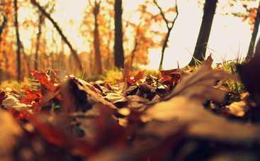 5 ноября: какой сегодня праздник, приметы, именинники и запреты