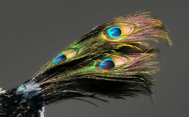 МАСКА: голову Павлина покроют 500 перьев настоящей птицы