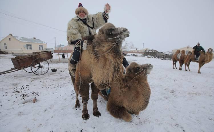Мир наизнанку-11: Дима Комаров впервые поучаствует в гонках на верблюдах