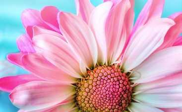 Павел Глоба: 4 знака Зодиака могут столкнуться с проблемами в начале лета