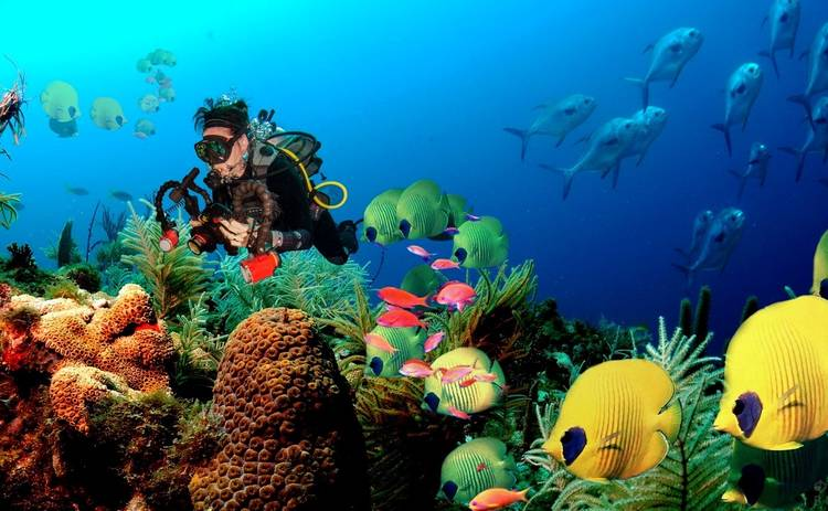 Затерянный мир: призраки подводного мира – самые необычные и странные существа океана