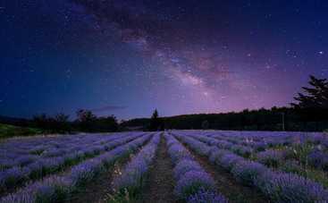 Где и когда смотреть звездопад Персеиды-2021