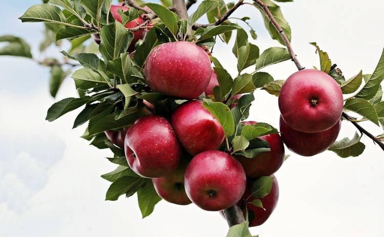 Яблочный спас 2021: что можно и нельзя делать