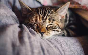 Доктор назвала простой способ нормализовать сон
