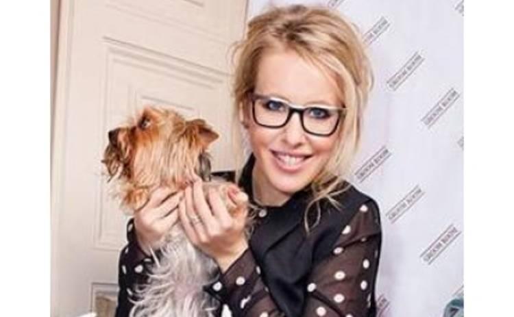 Ксения Собчак обеспечила 200 собак