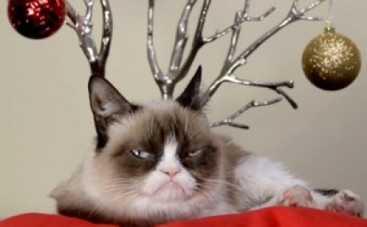 Самые известные коты интернета снялись в рождественском клипе (ВИДЕО)