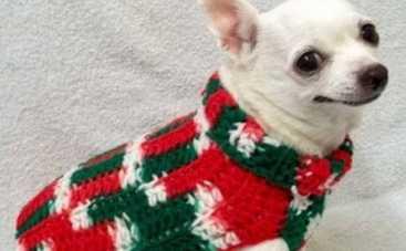 Новый год 2016: новогодний свитер для собаки своими руками (ФОТО)