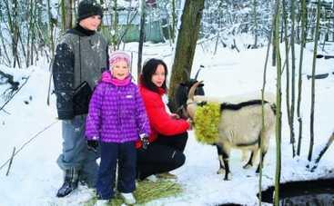 Новый год 2015: Евгения Добровольская нарядила коз для праздника (ФОТО)