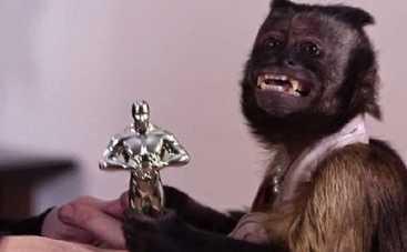 Первый Оскар 2015 получила обезьянка