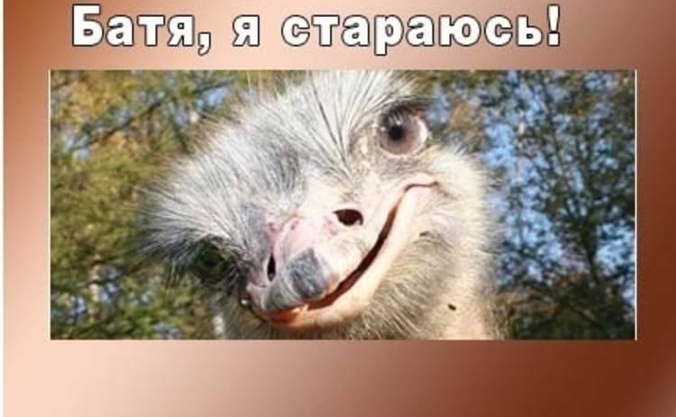 Анекдот дня: свежие анекдоты о страусах на Tv.ua