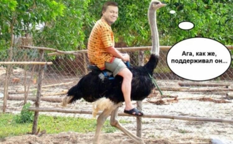 Янукович и страусы: лучшие фотожабы недели (ФОТО)