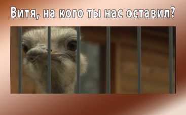Анекдоты дня: как Янукович страусов поддерживал