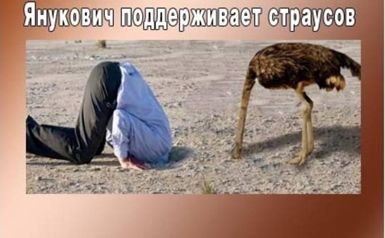 Анекдоты дня: страусы Януковича и не только!