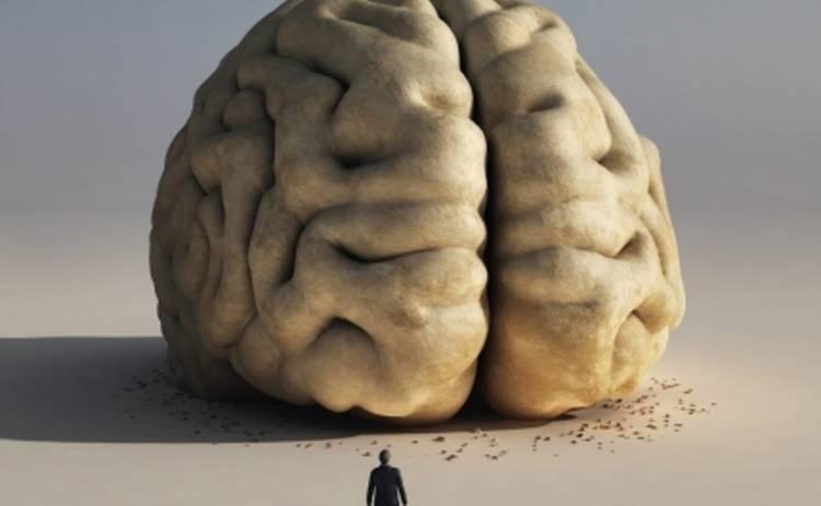 Интересные факты про мозг