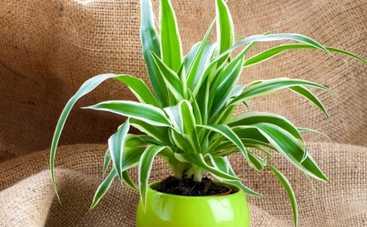 Все буде добре: ТОП-5 комнатных растений для ленивых
