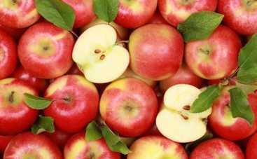 Яблочный Спас 2015: традиции праздника