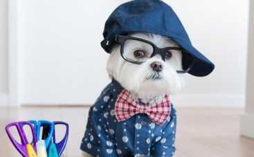 Звездный собака: пес-хипстер покоряет Интернет (ФОТО)