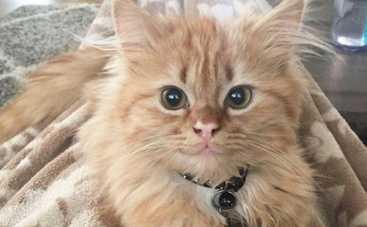 Кот с улыбкой взорвал Сеть (ФОТО)