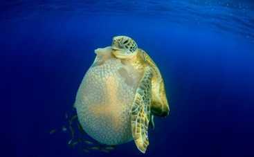 Дно достигнуто. Лучшие подводные фотографии года