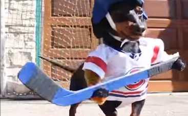 Трусы не играют в хоккей. Как таксы на асфальте в хоккей играли