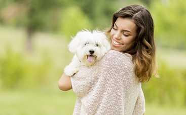 Собаки размера XS: выбираем питомца
