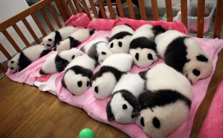 Панда-пост: секретный ингредиент существует? (видео)