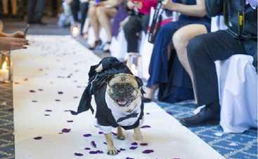 Молодожены из Англии сделали собаку свидетелем на свадьбе (фото)